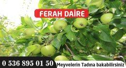FERAH DAİRE
